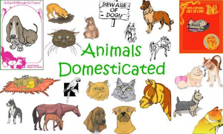 Animals_Domesticated