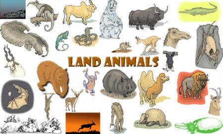 Animals_Land_Animals