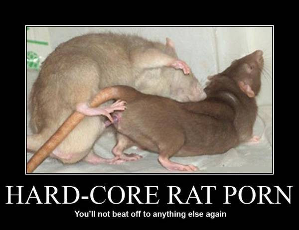 hardcore_rat_porn