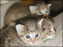 40714446_wildkittens2index203tx