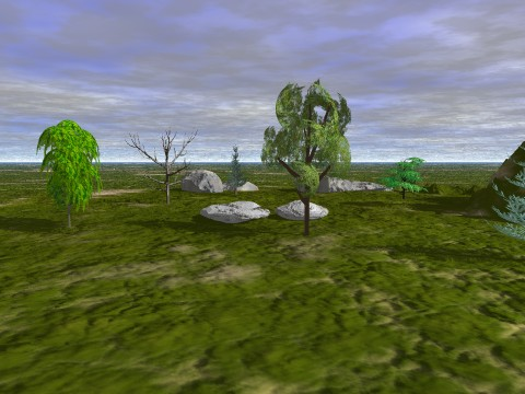 trees_and_rocks
