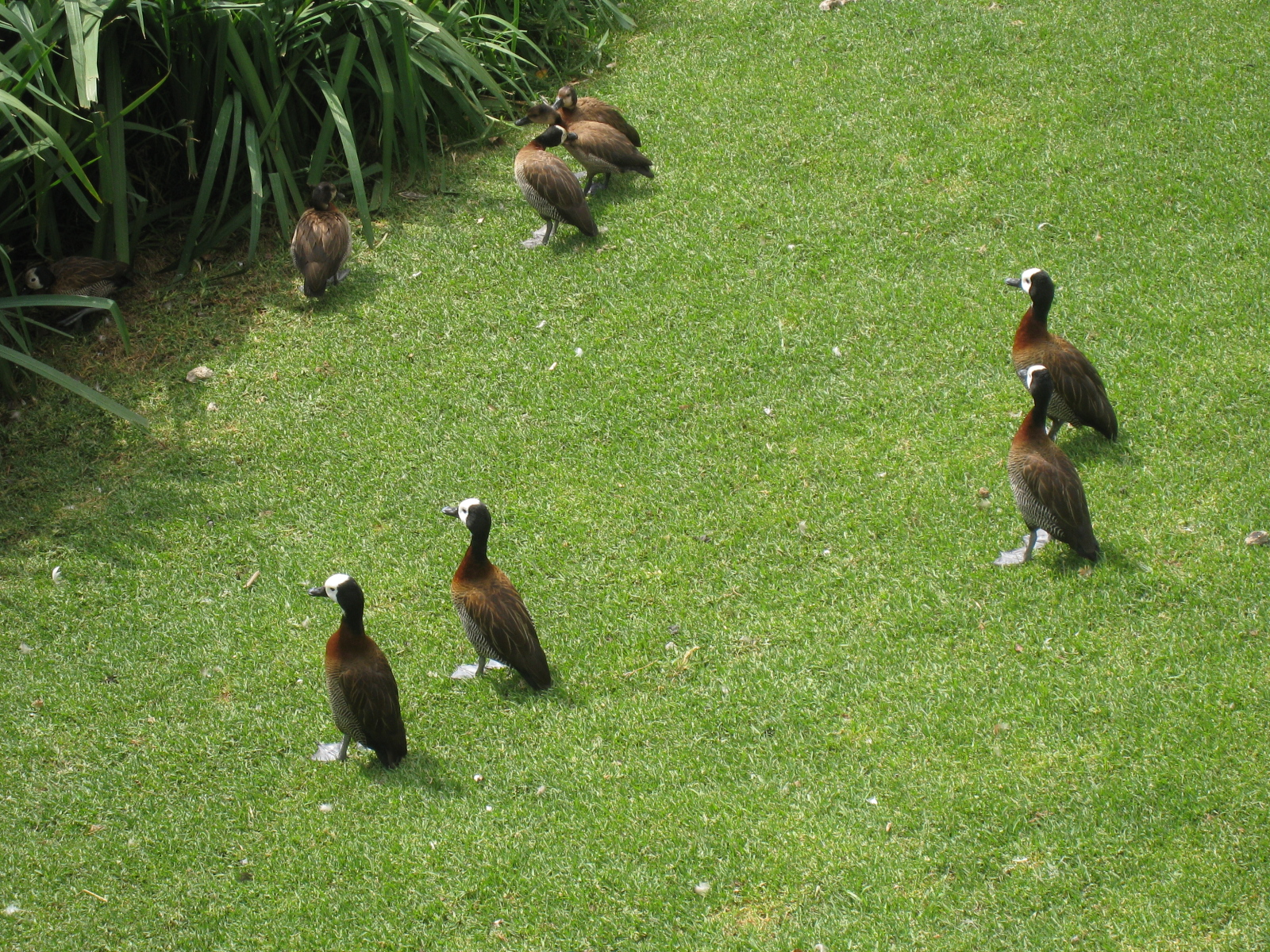 Duck_Meeting