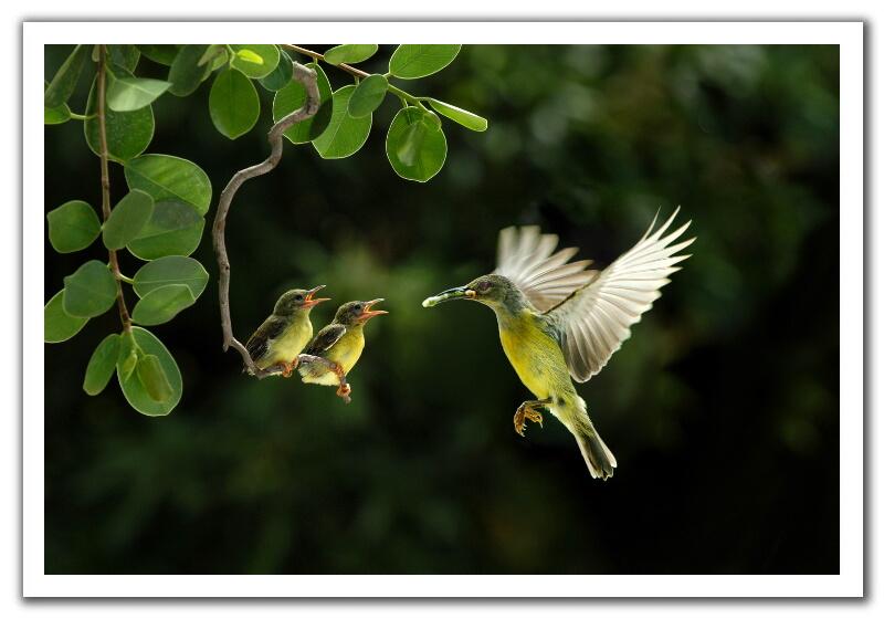 sunbird_3