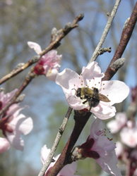 Spring_flowers0036